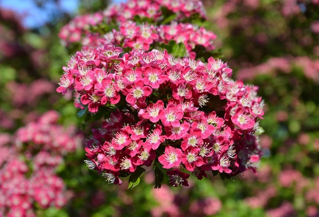 1-ый фестиваль цветников «Nature» пройдет вТюмени 30июня