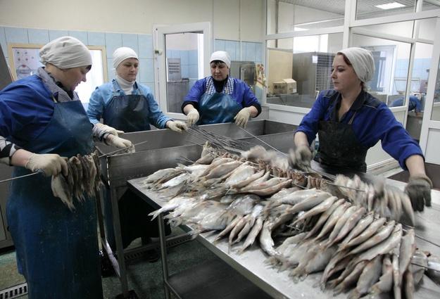 Нарыбоперерабатывающем тюменском заводе открывают новые рабочие места