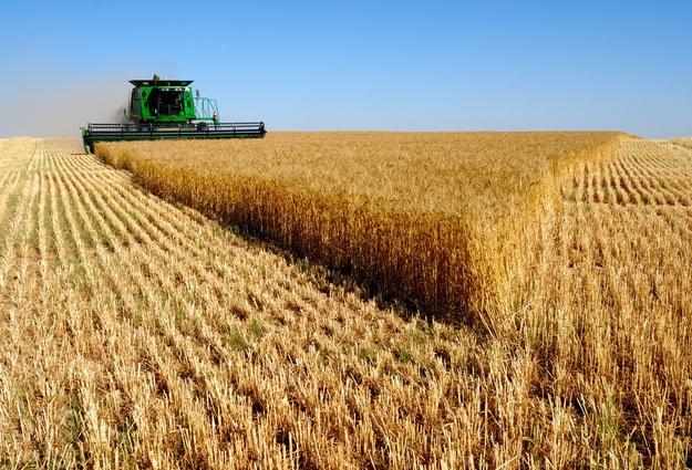 Тюменские аграрии собрали урожай, как влучшие годы