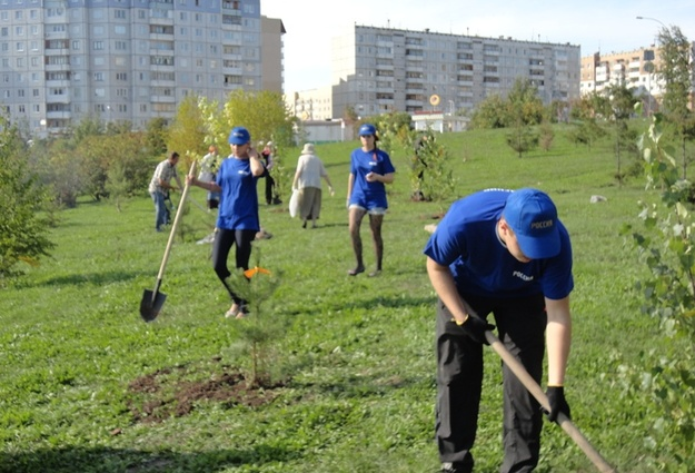 посадка деревьев на усмотрение администрации города дерево