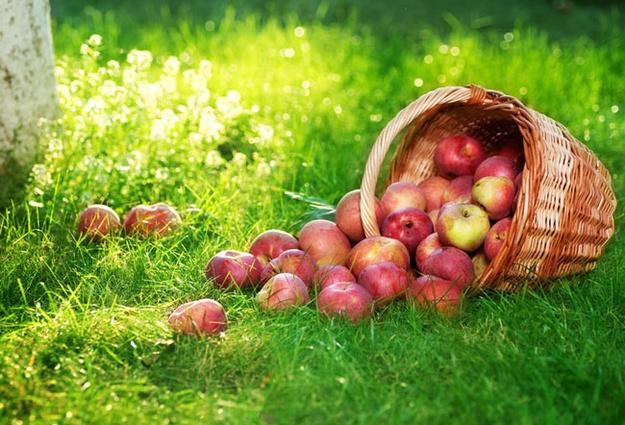 Православные Якутии отмечают Преображение Господне иосвящают яблоки