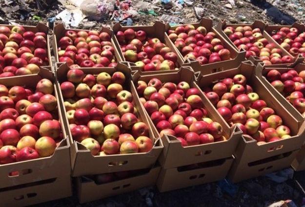 Под Воронежем уничтожили 8т польских яблок