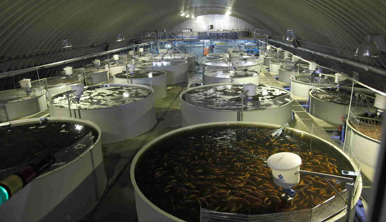 бизнес план по производству рыболовных сетей