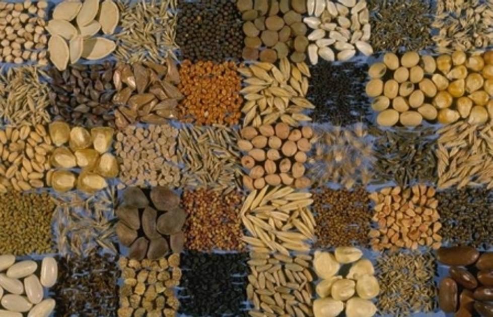 Где и как хранить семена в домашних условиях