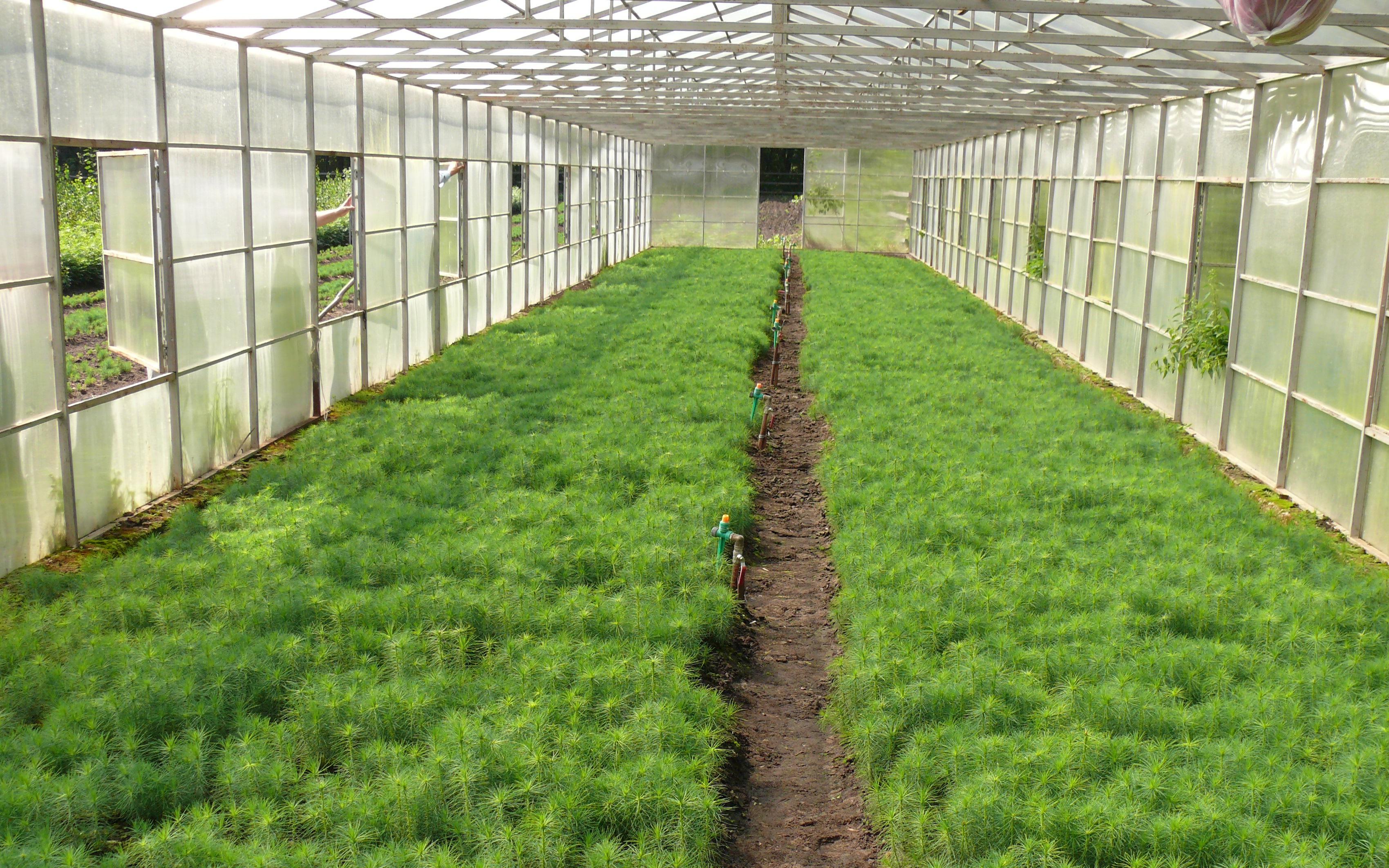 Выращивание в теплице на севере