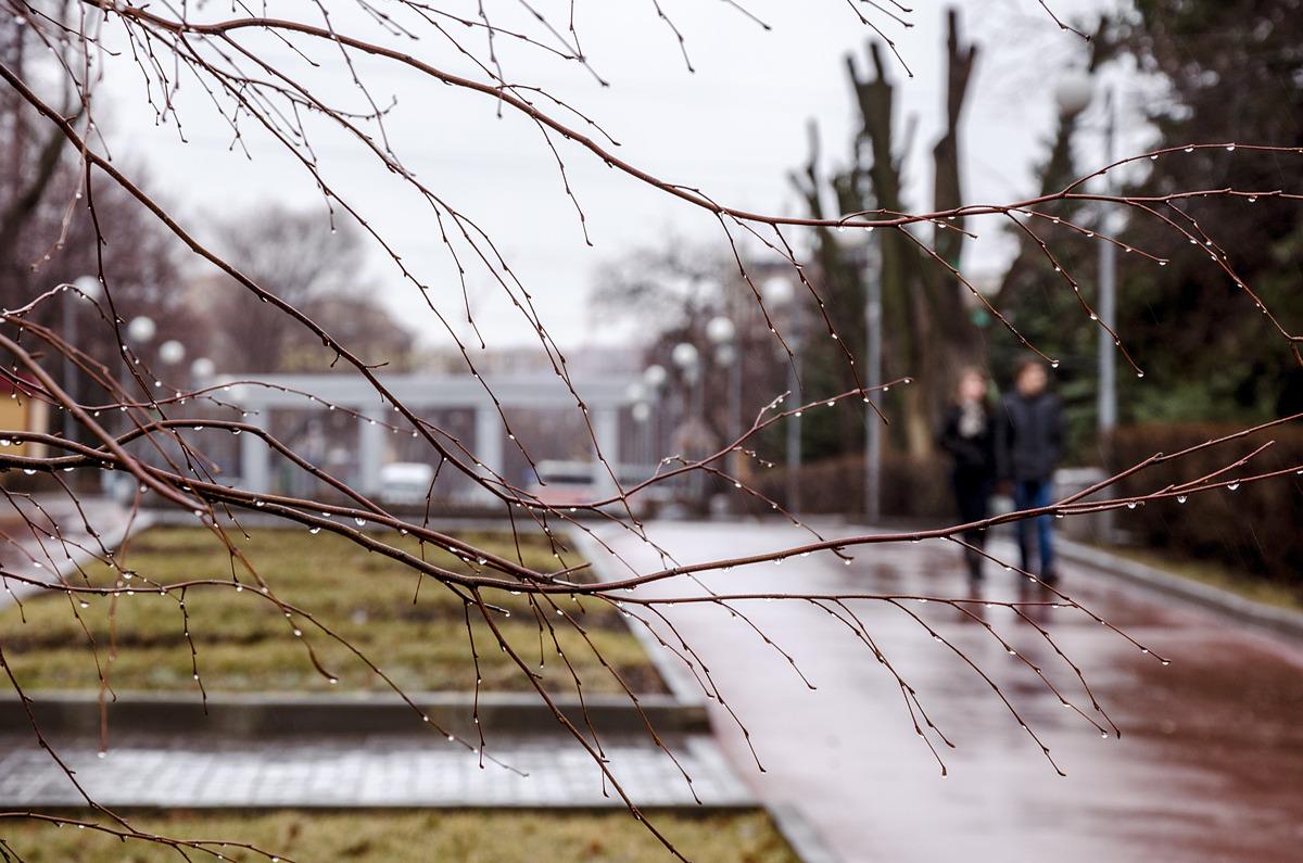 эрмитаж картинки дождь весной в городе является ведущим лечебным