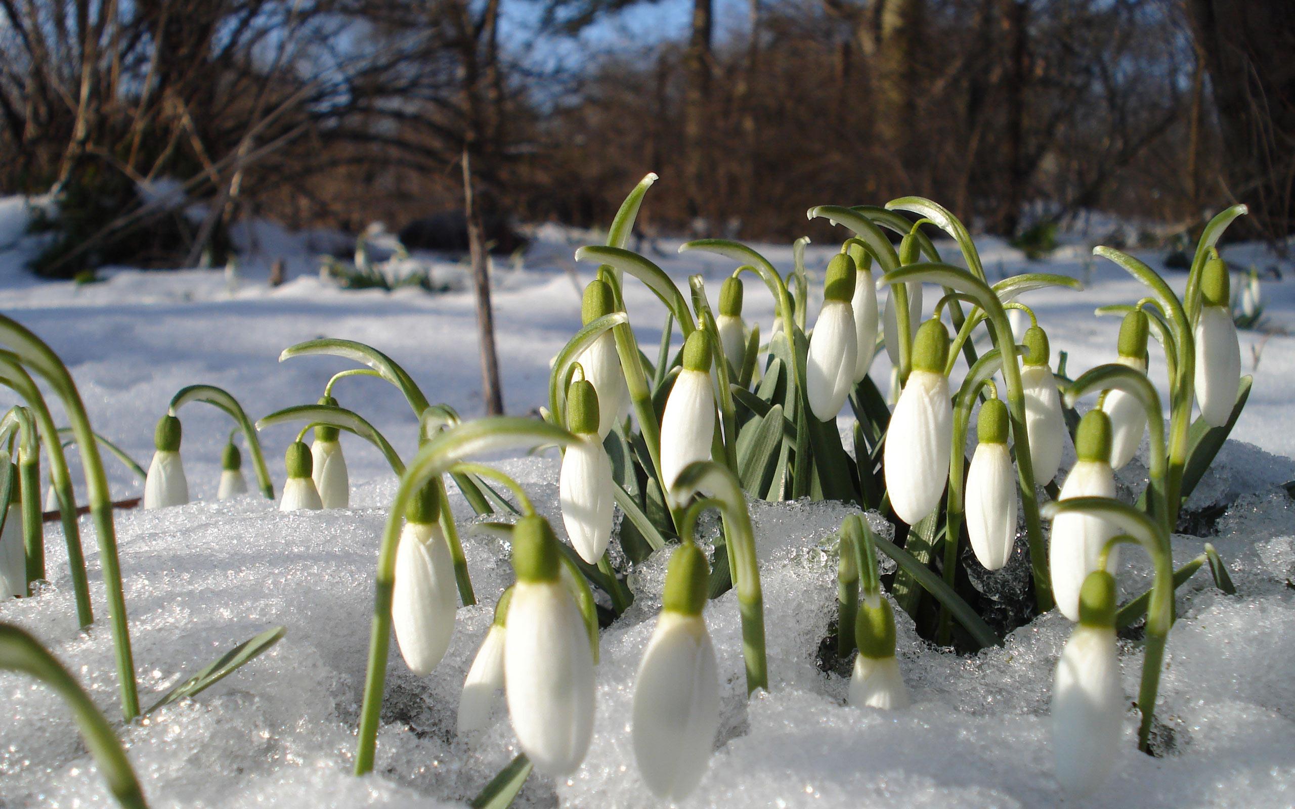 Март это весна или зима намерены
