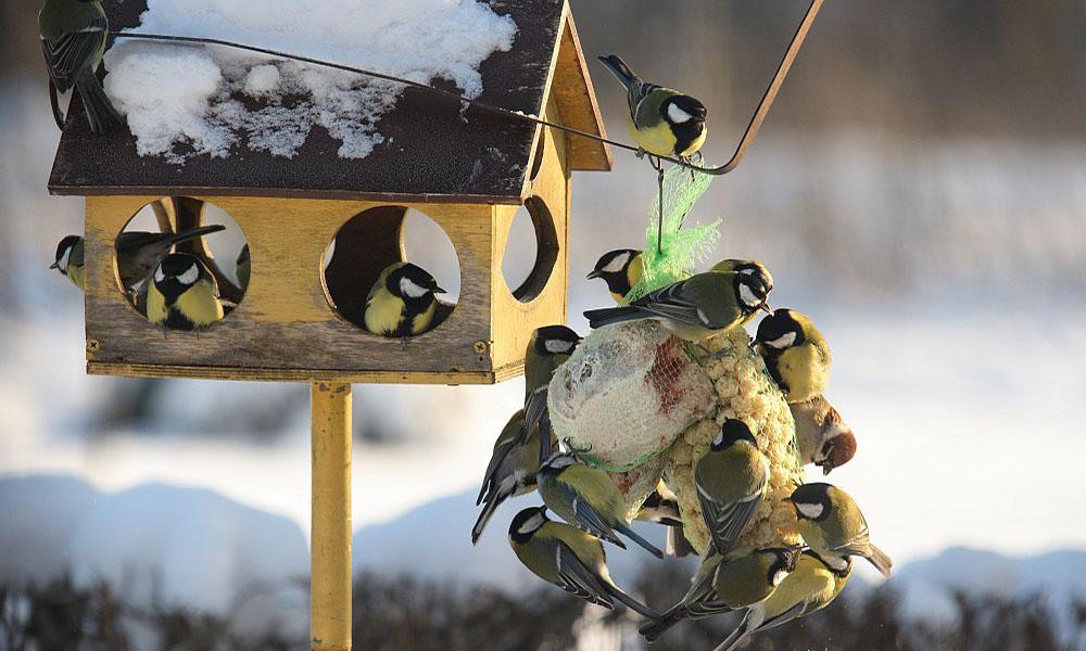 смотреть фото фотоконкурса птицы на кормушке еще только