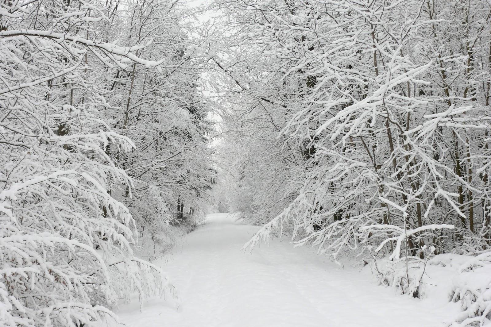 Картинки на л о зиме