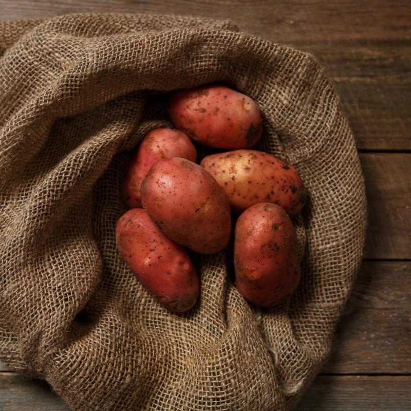 красный картофель сорт фото этом