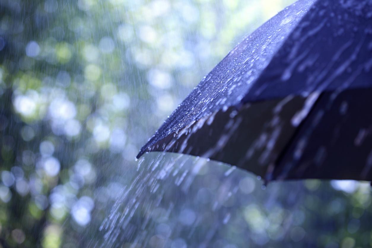 Картинки идет дождь в лесу полки открыты